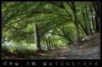 Weg am Waldesrand