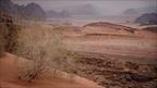 Wadi-Rum-Strauch-Sand -- Israel und Jordanien