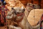 -- Israel und Jordanien