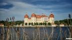 Moritzburg-Suedost-Schilf
