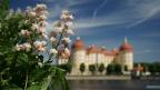 Moritzburg-Suedwest-Kastanie
