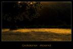 goldenerAbend -- KONICA MINOLTA DIGITAL CAMERA
