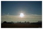 morning dew -- SONY DSC