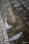 Prag-Rathaus-Spiegelung-Wasser