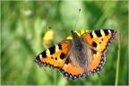 Schmetterling first -- KONICA MINOLTA DIGITAL CAMERA