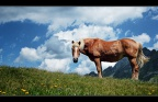 Pferd auf der Weide