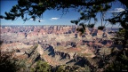 grand-canyon-desert-view-tree
